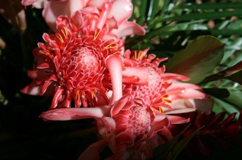 Article : Carnaval des fleurs, les nécessités…………et le désir